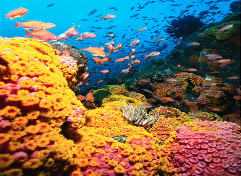 Coral Reef In Qatar Are Home To One Of Every Four Marine Species