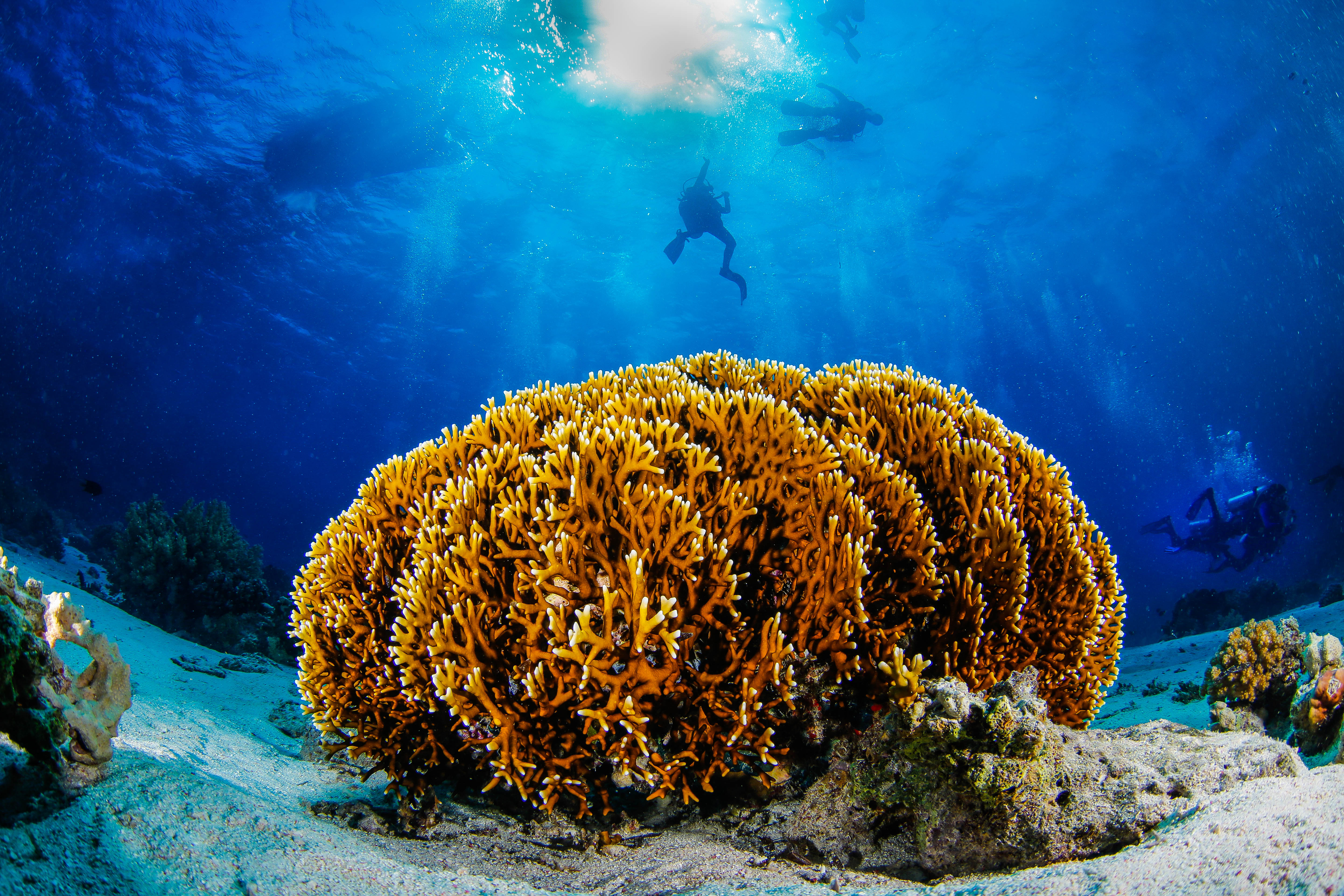 Coral Reef in Qatar - are home to one of every four marine