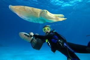 Scuba Diving Qatar