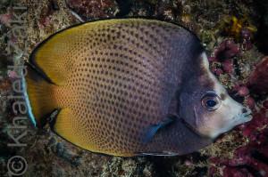 BTRF Fish Qatar