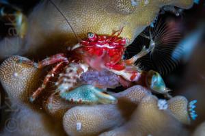 Ceramic crab 3 Thailand