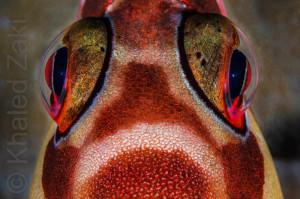 Macro fish eye WM